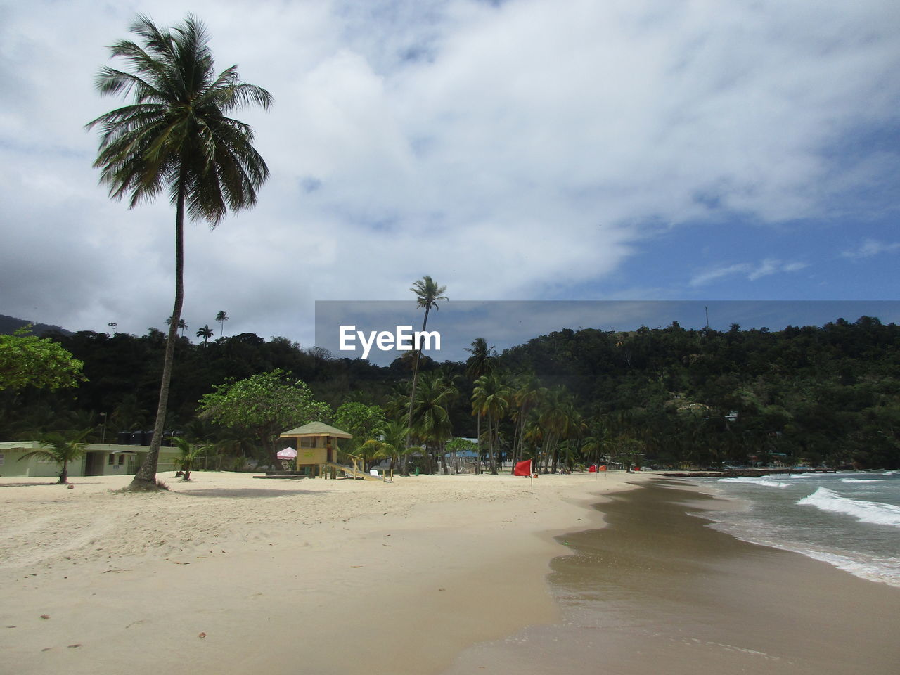 tree, palm tree, beach, sand, sky, nature, scenics, tranquility, beauty in nature, growth, sea, no people, outdoors, water, day
