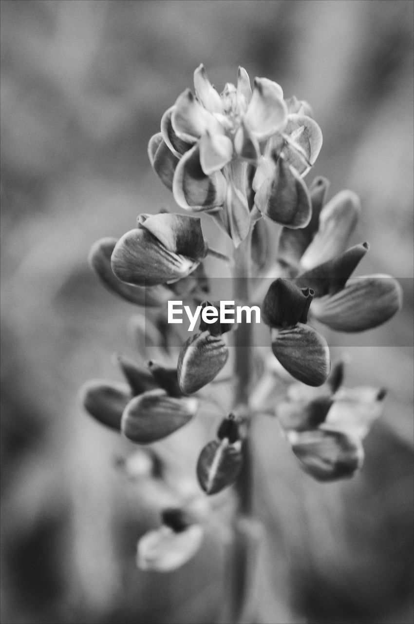 growth, plant, flower, vulnerability, flowering plant, fragility, close-up, selective focus, beauty in nature, no people, freshness, nature, day, petal, bud, flower head, focus on foreground, inflorescence, outdoors, botany