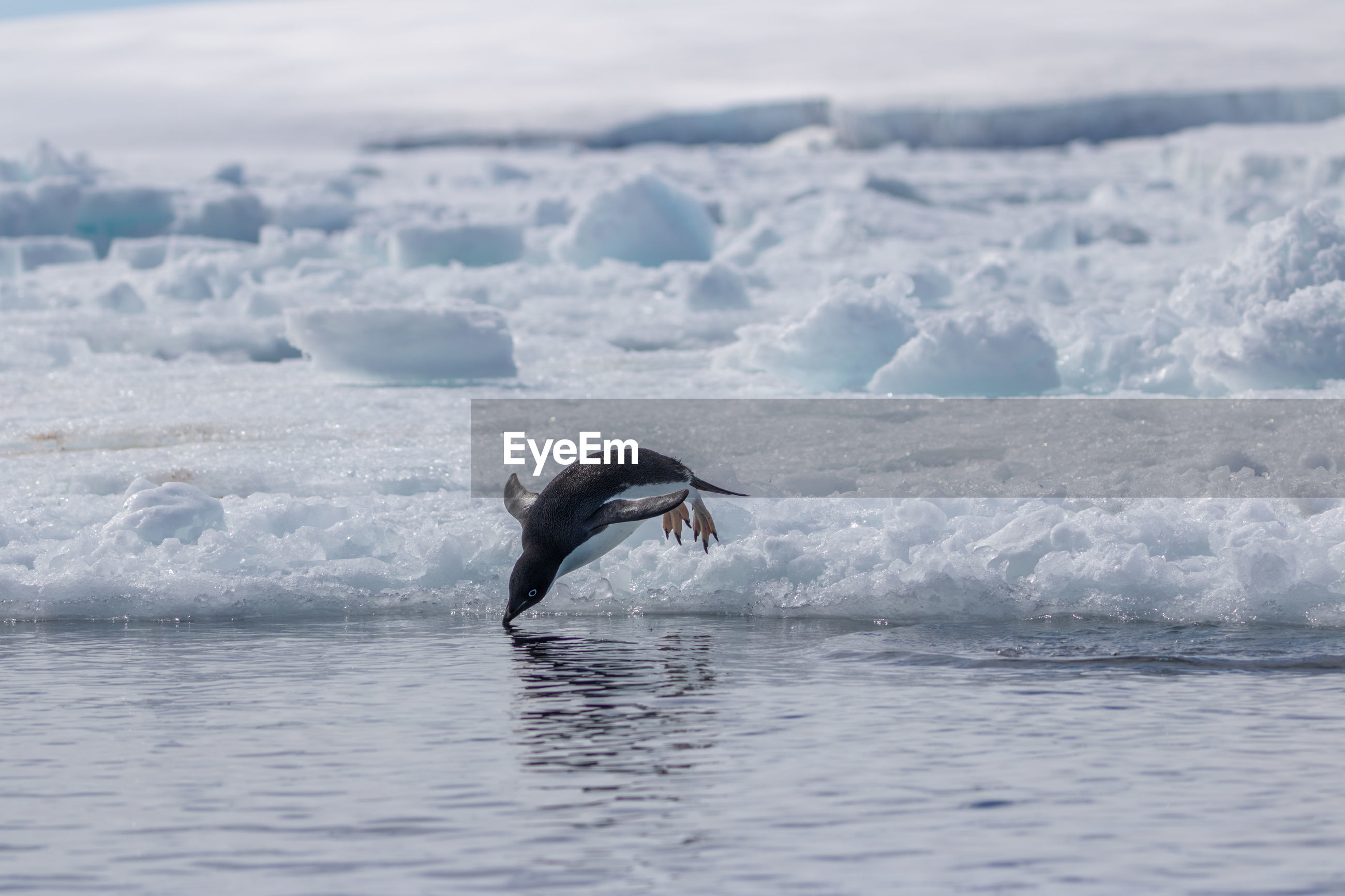 VIEW OF A BIRD SWIMMING IN SEA