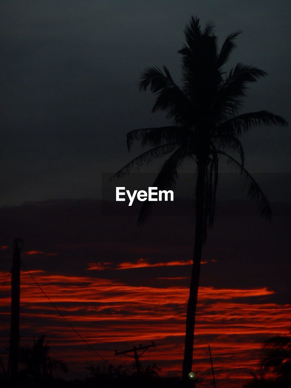 sky, palm tree, silhouette, tropical climate, sunset, beauty in nature, tree, tranquil scene, scenics - nature, plant, tranquility, nature, cloud - sky, growth, no people, orange color, outdoors, environment, non-urban scene, idyllic, coconut palm tree, palm leaf, tropical tree