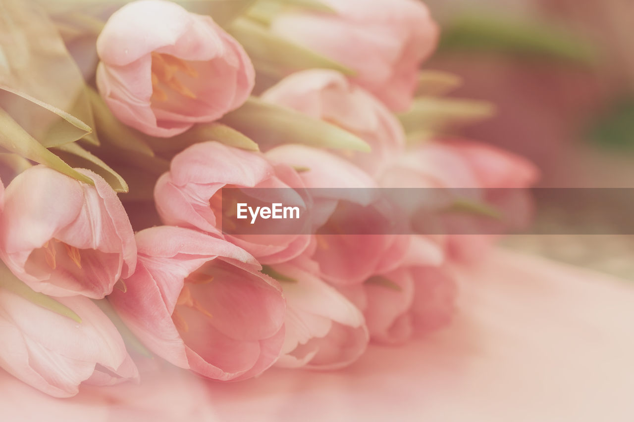 flower, flowering plant, plant, beauty in nature, freshness, close-up, pink color, petal, vulnerability, fragility, flower head, nature, inflorescence, no people, focus on foreground, selective focus, rose, rose - flower, indoors, softness, flower arrangement, bunch of flowers, bouquet