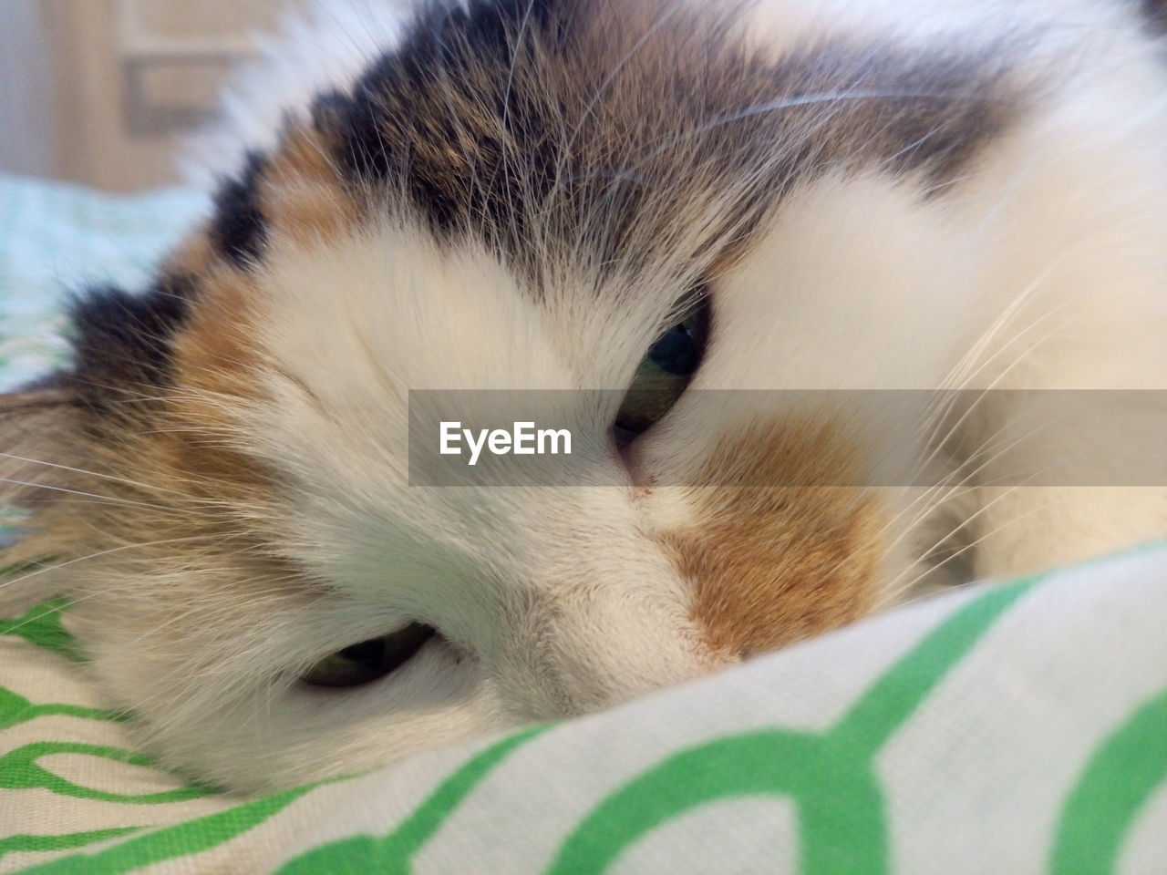 domestic, animal themes, mammal, pets, animal, one animal, domestic animals, close-up, vertebrate, relaxation, animal body part, cat, feline, indoors, domestic cat, no people, animal head, furniture, bed, whisker, animal eye