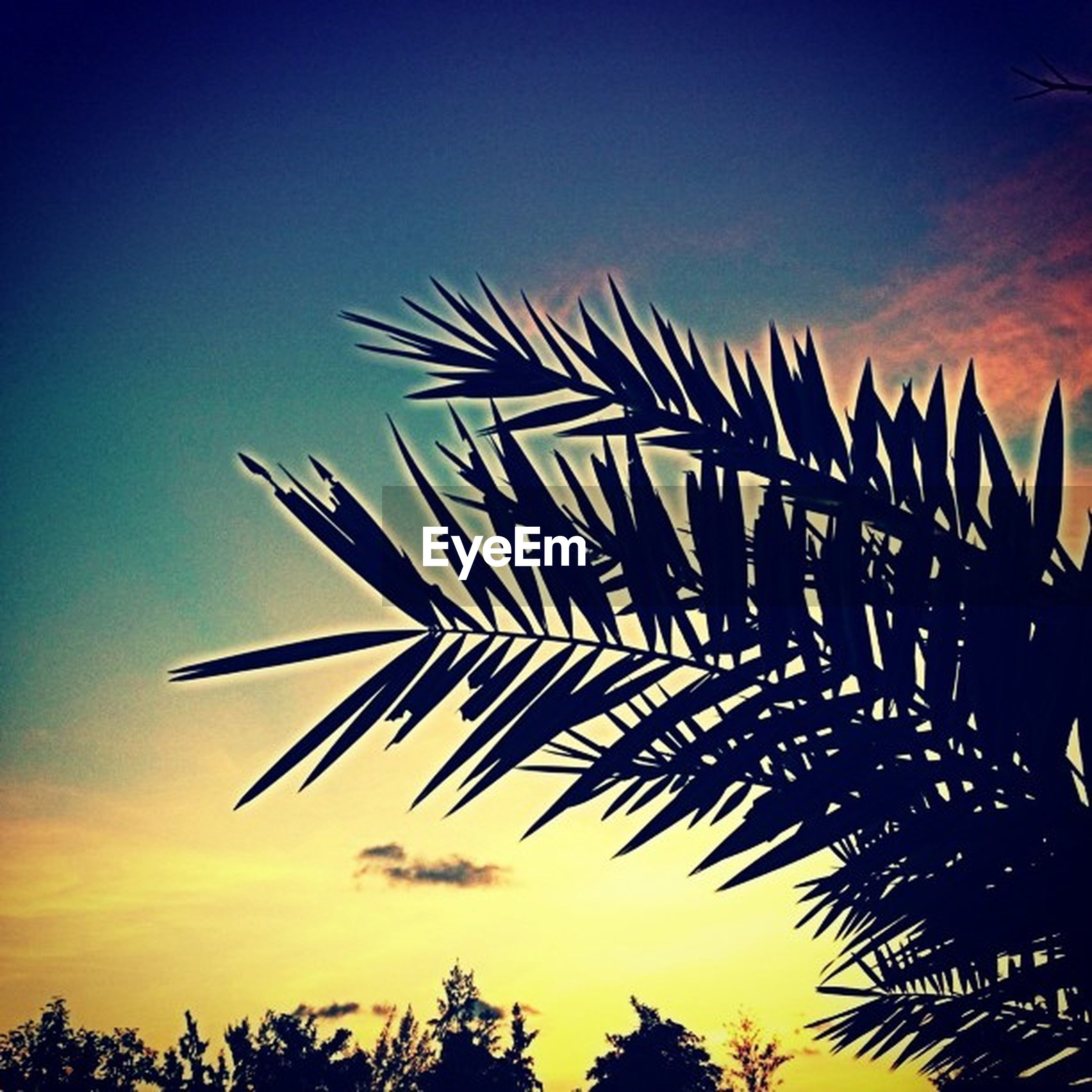 palm tree, low angle view, growth, sky, palm leaf, nature, tranquility, beauty in nature, tree, blue, silhouette, clear sky, leaf, tranquil scene, scenics, outdoors, no people, coconut palm tree, sunset, sunlight