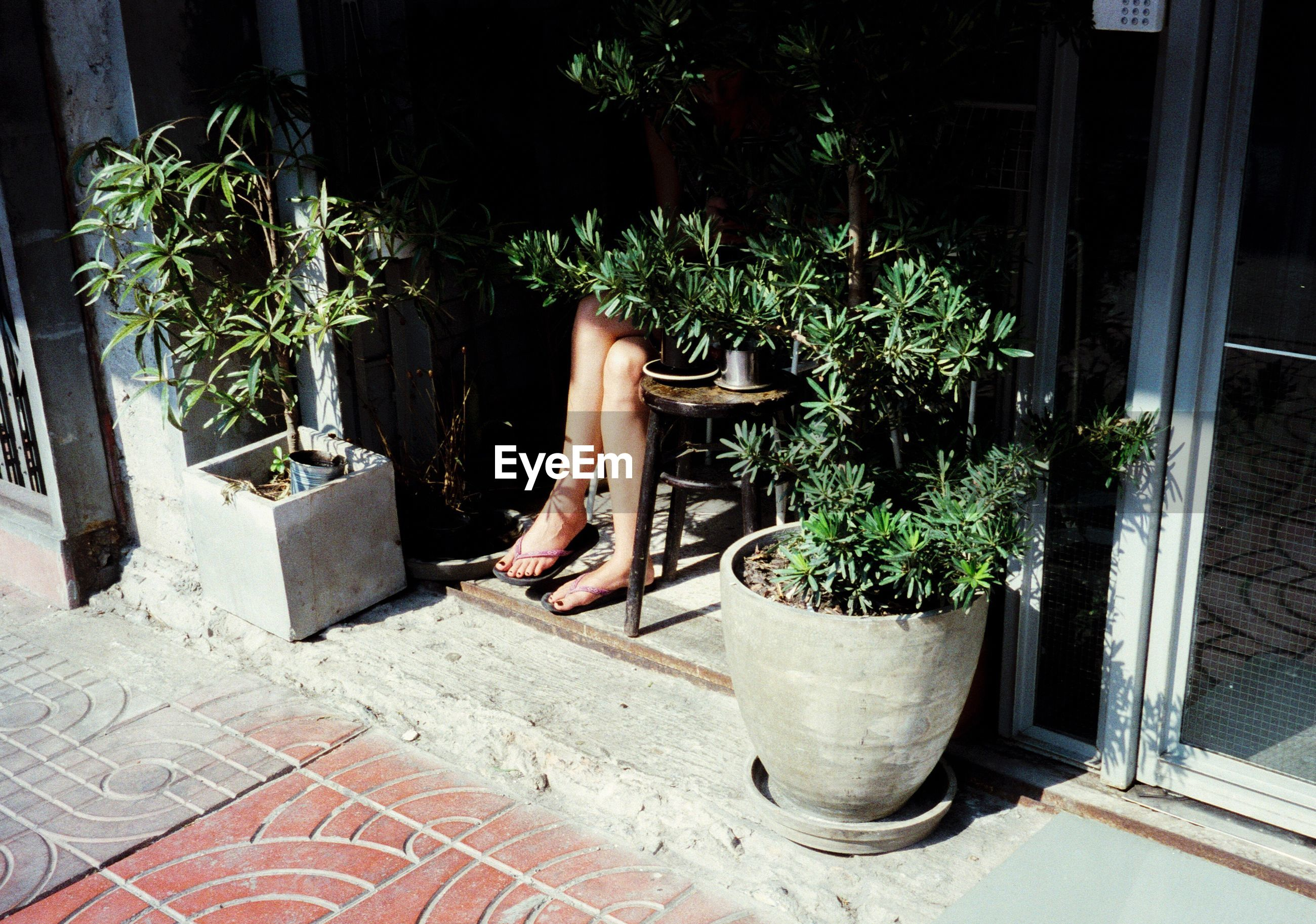 View of potted plants on street