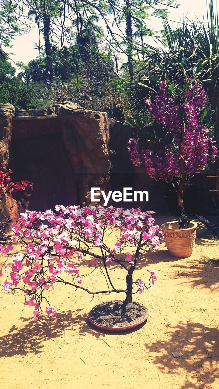 growth, flower, tree, plant, nature, potted plant, day, outdoors, no people, beauty in nature, water, freshness