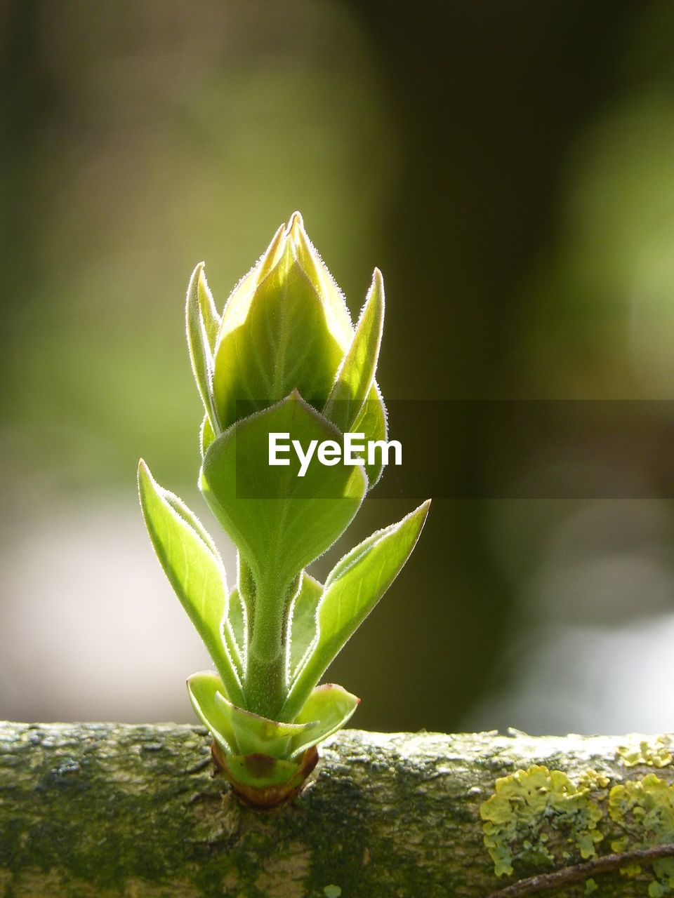 green color, growth, nature, plant, no people, day, leaf, close-up, beauty in nature, outdoors, freshness, fragility