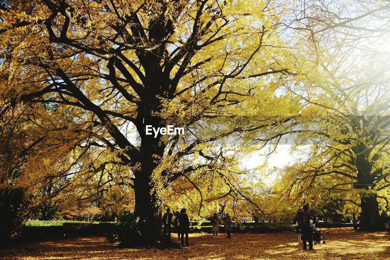 TREES IN AUTUMN AGAINST SKY