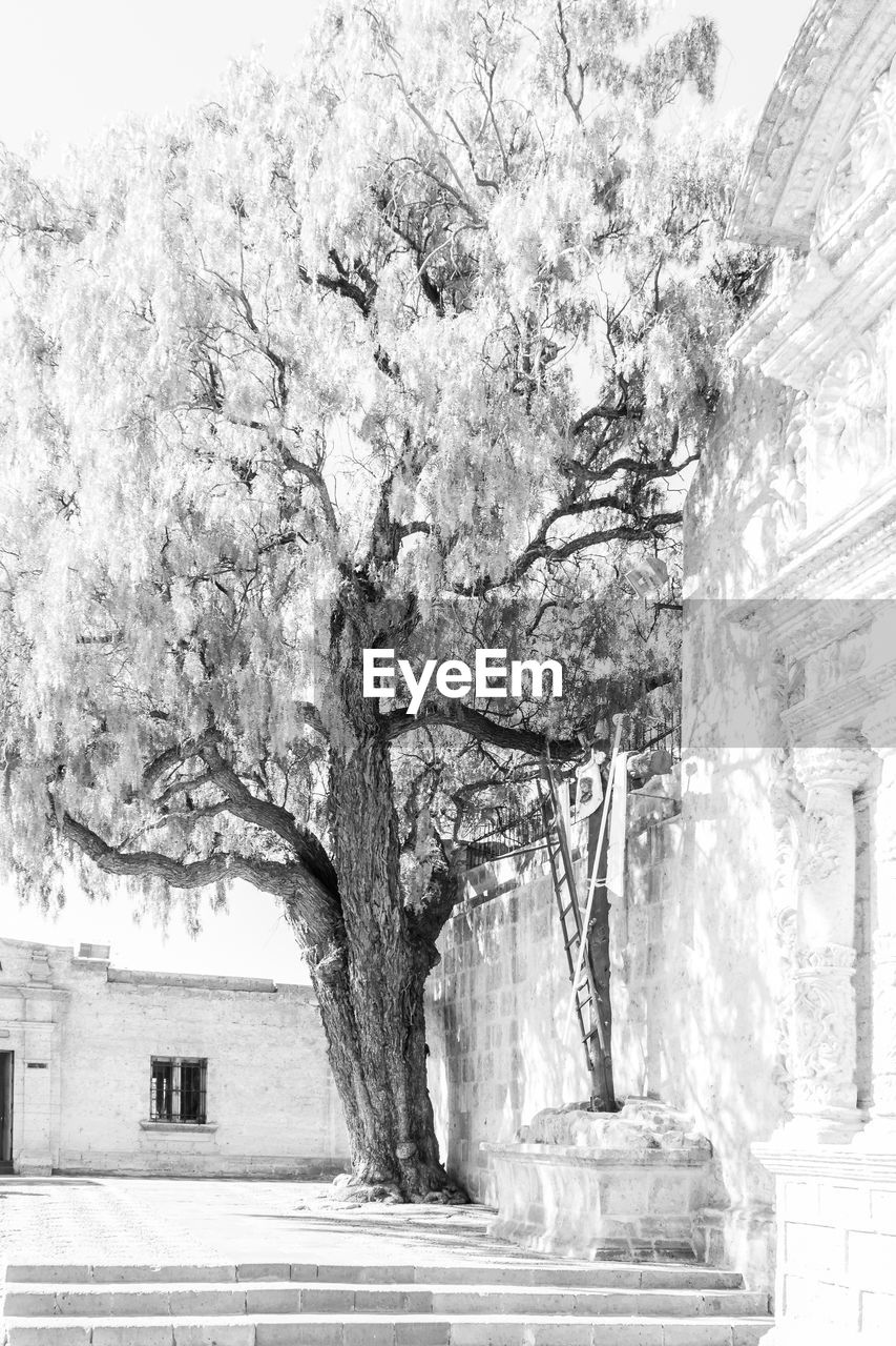 tree, plant, architecture, built structure, nature, outdoors, no people, building exterior, day, city, growth, tree trunk, building, trunk, beauty in nature, street, branch, wall, direction, white