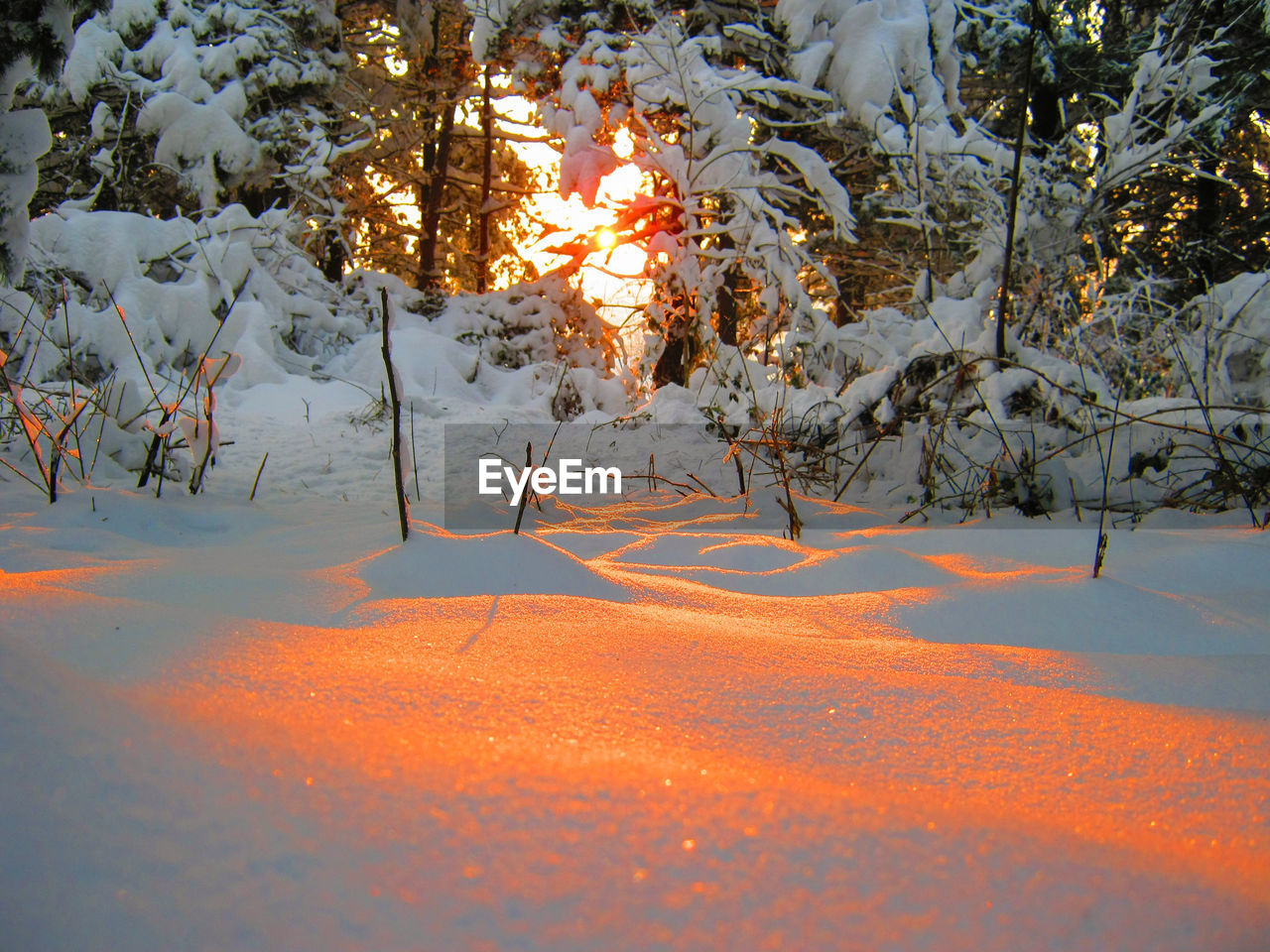 SNOW COVERED LAND AND TREES DURING SUNSET