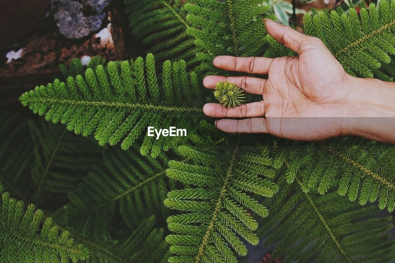 green color, growth, leaf, human body part, human hand, nature, plant, fern, close-up, day, outdoors, freshness, real people, beauty in nature, one person, people