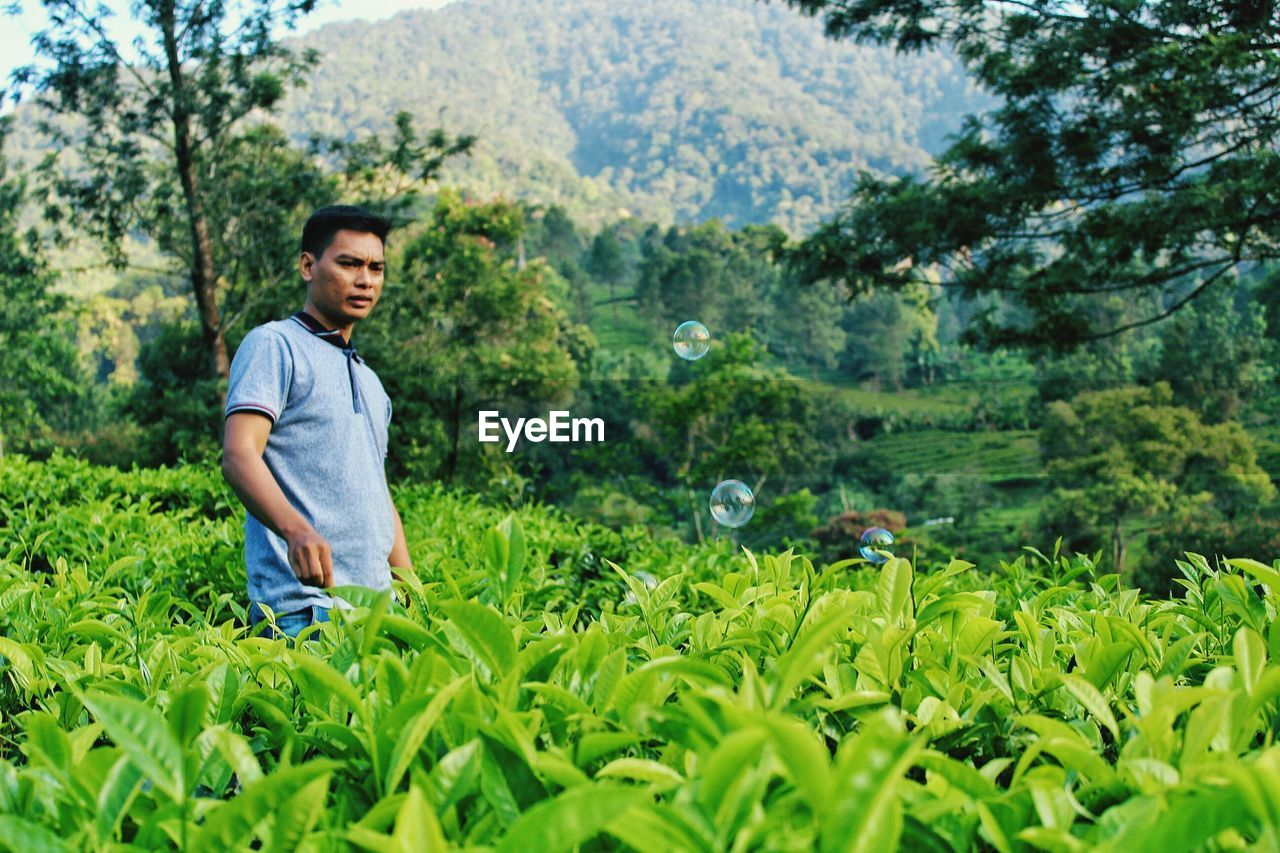 Man standing in tea plantation