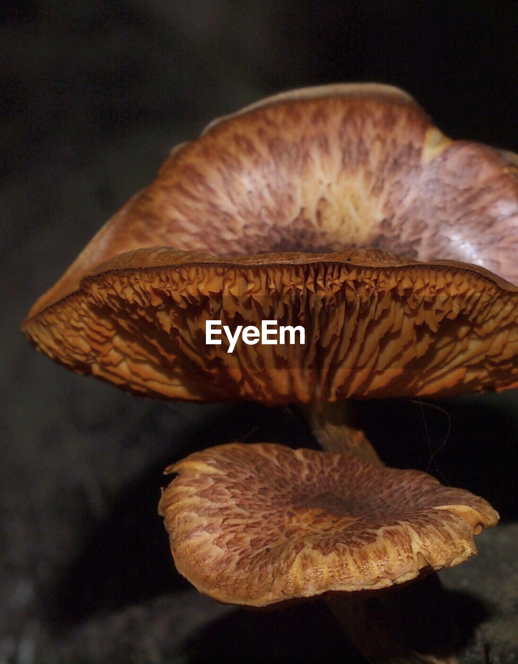 Close-up of brown mushrooms