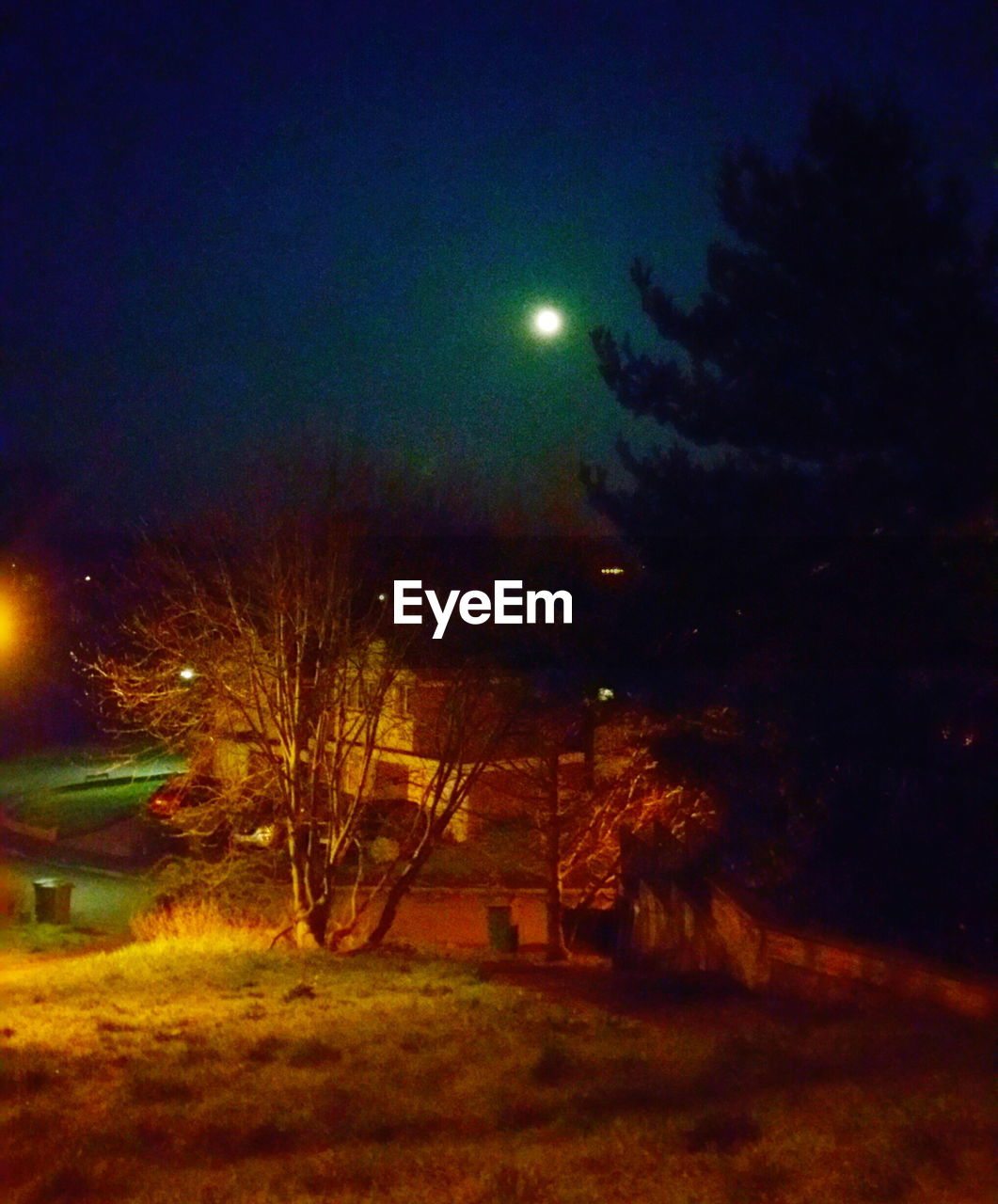 night, moon, nature, tree, sky, no people, illuminated, tranquility, beauty in nature, outdoors, tranquil scene, astronomy, grass, moonlight, scenics, bare tree, half moon, building exterior