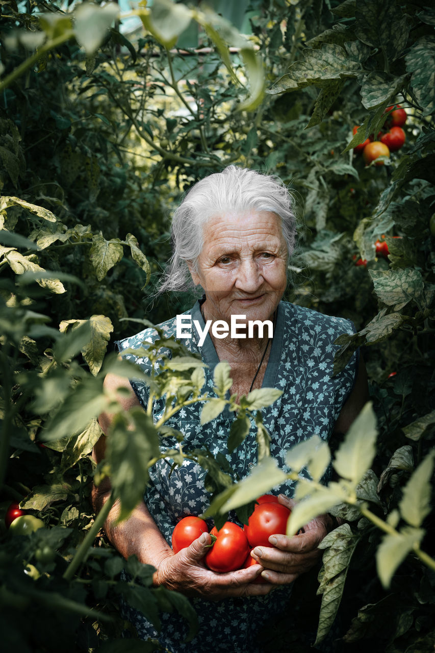 Portrait Of Senior Woman Holding Tomatoes While Standing Amidst Plants