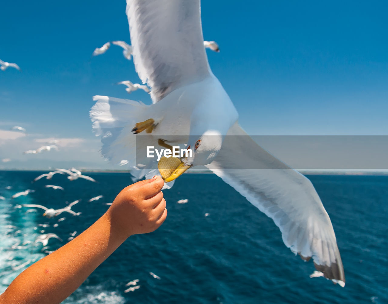 human hand, hand, real people, water, animal, one person, eating, vertebrate, human body part, sea, feeding, sky, animal themes, holding, nature, food, flying, seagull, animal wildlife, unrecognizable person, outdoors, body part, horizon over water, finger