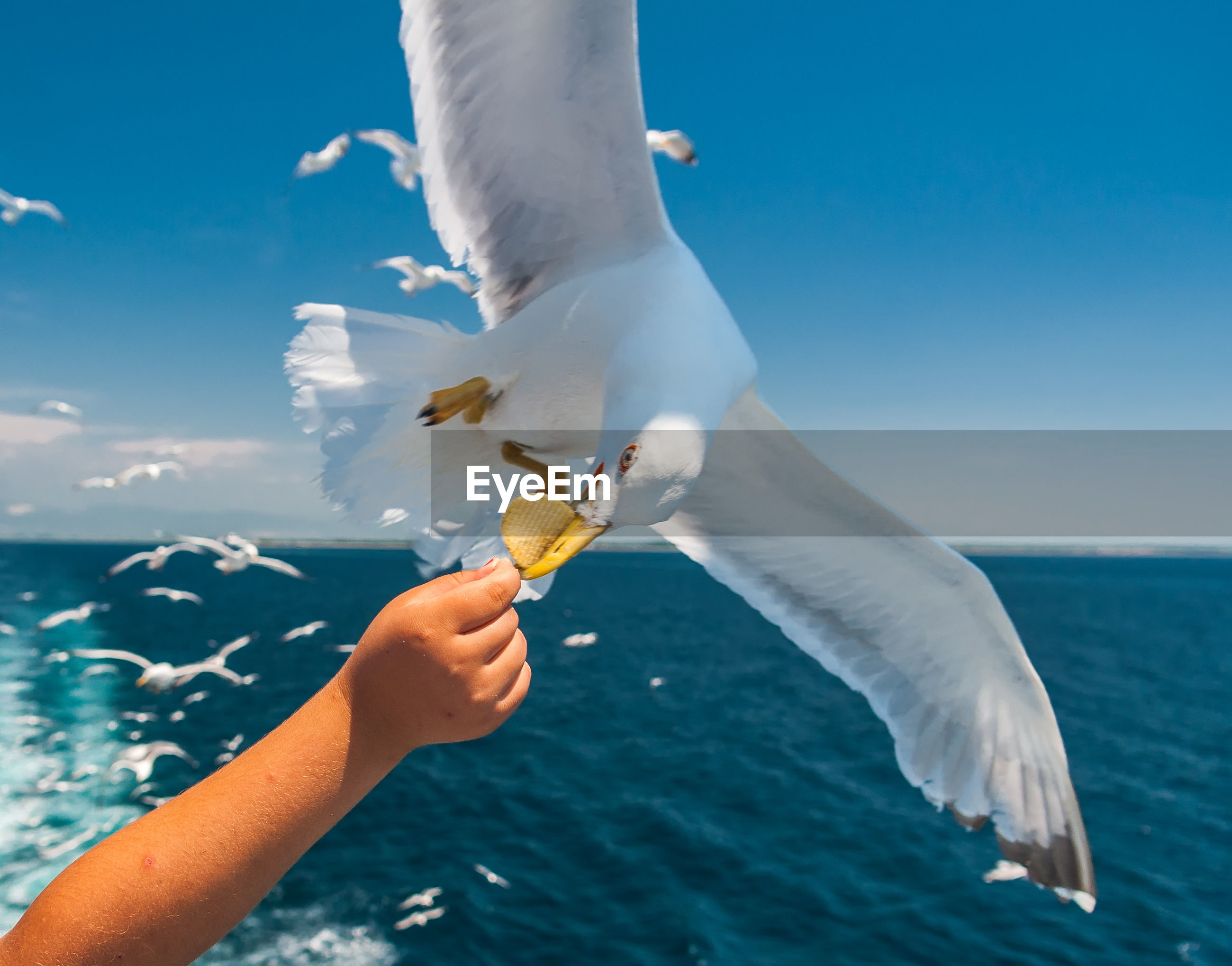 Cropped hand feeding food to seagull at sea