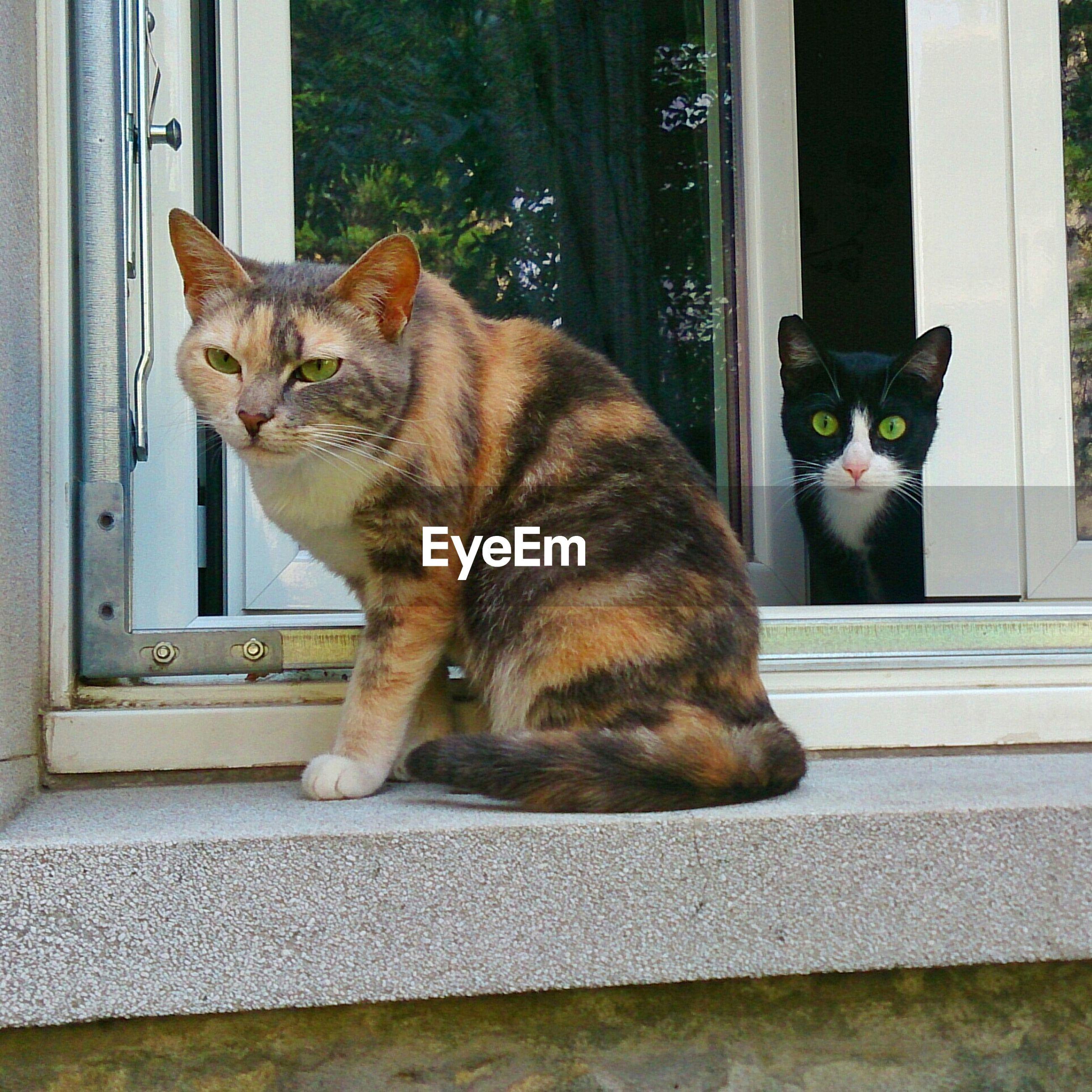 Cats sitting on window sill