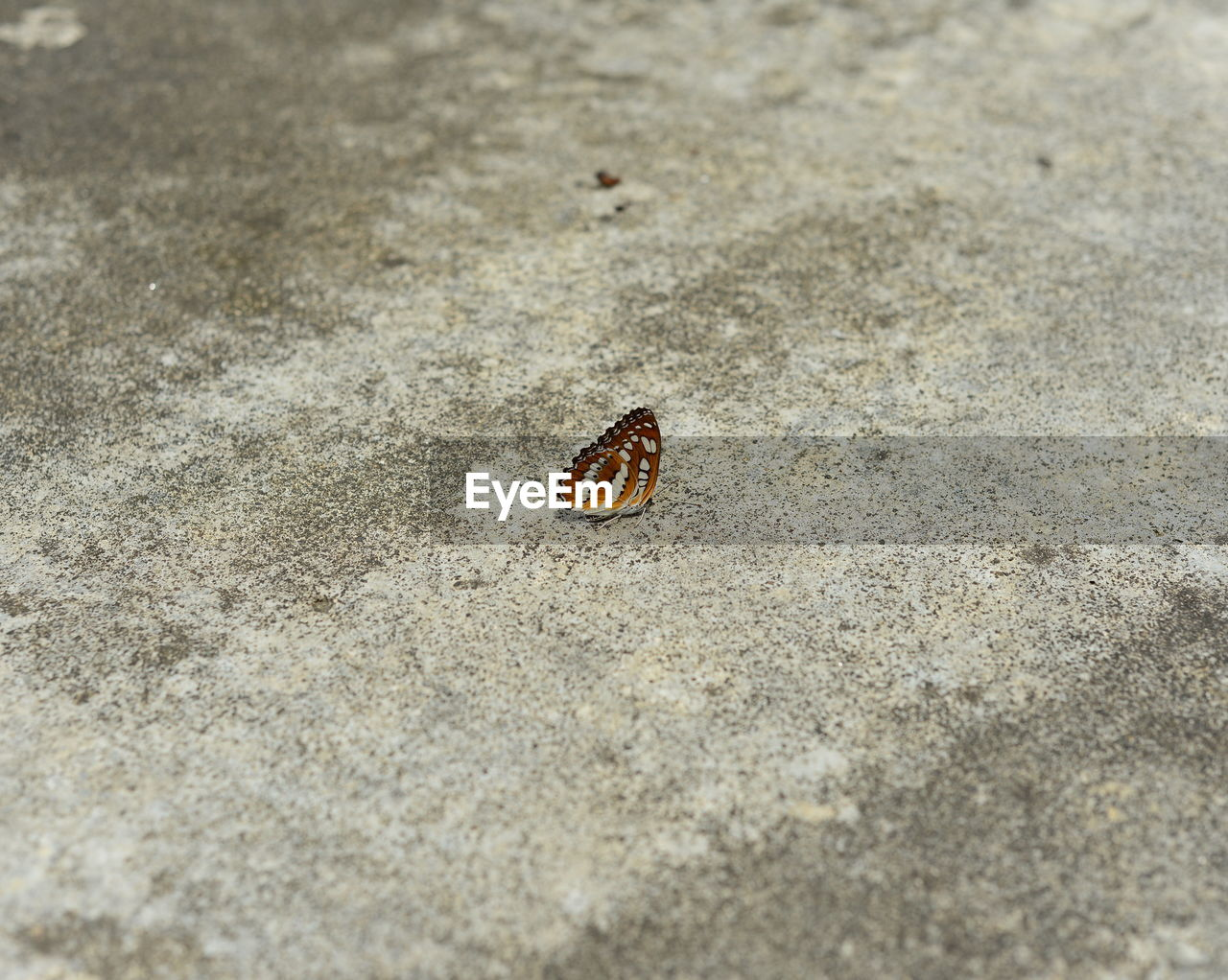 High Angle View Of Butterfly On Concrete