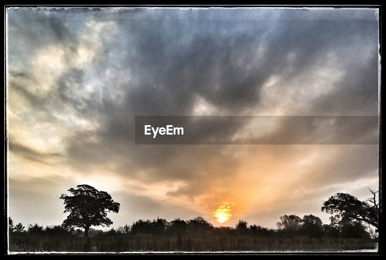 tree, beauty in nature, cloud - sky, tranquil scene, sky, scenics, sunset, silhouette, tranquility, nature, no people, idyllic, outdoors, low angle view, growth, landscape, storm cloud, day