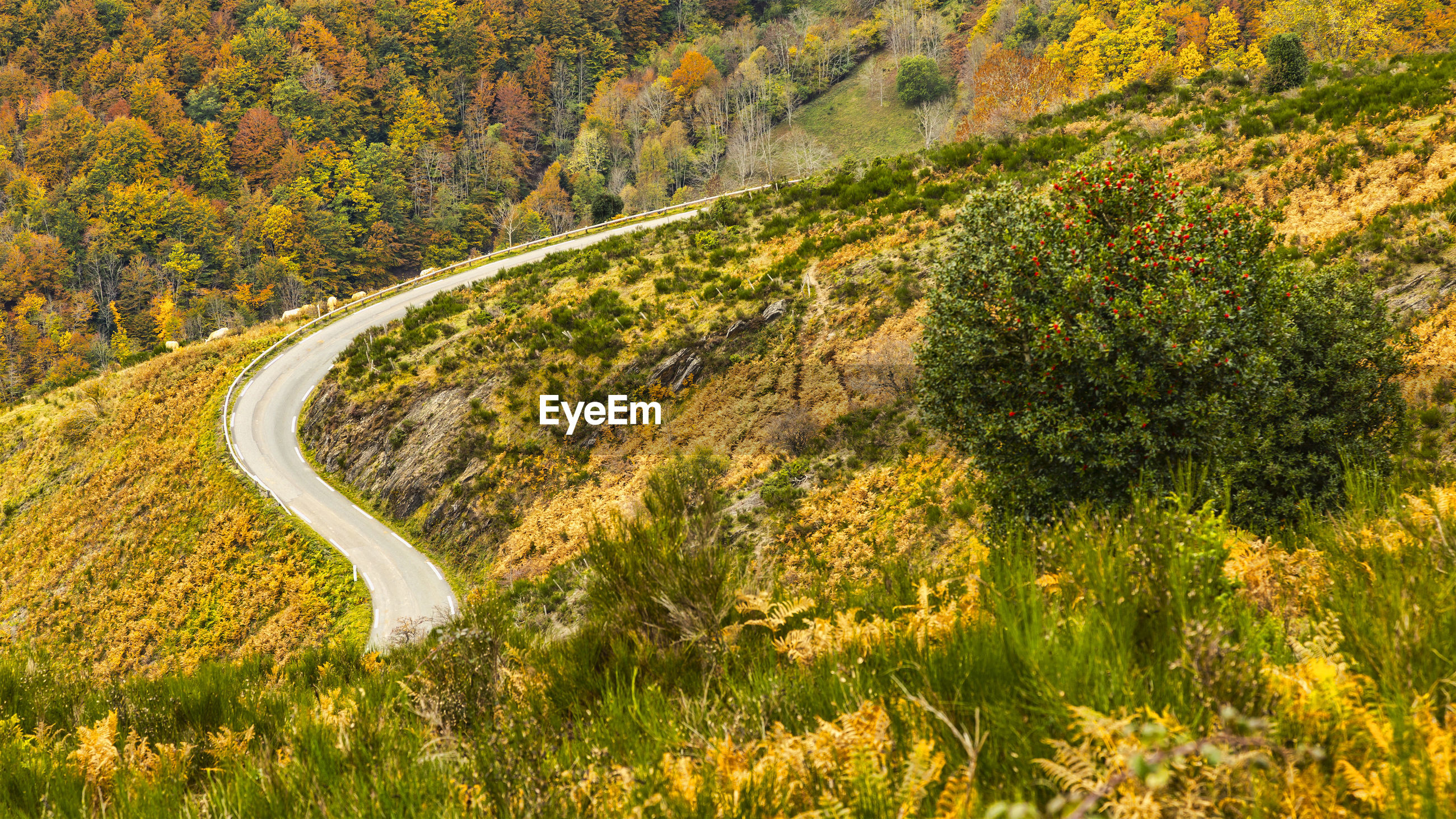 Scenic view of road amidst trees during autumn