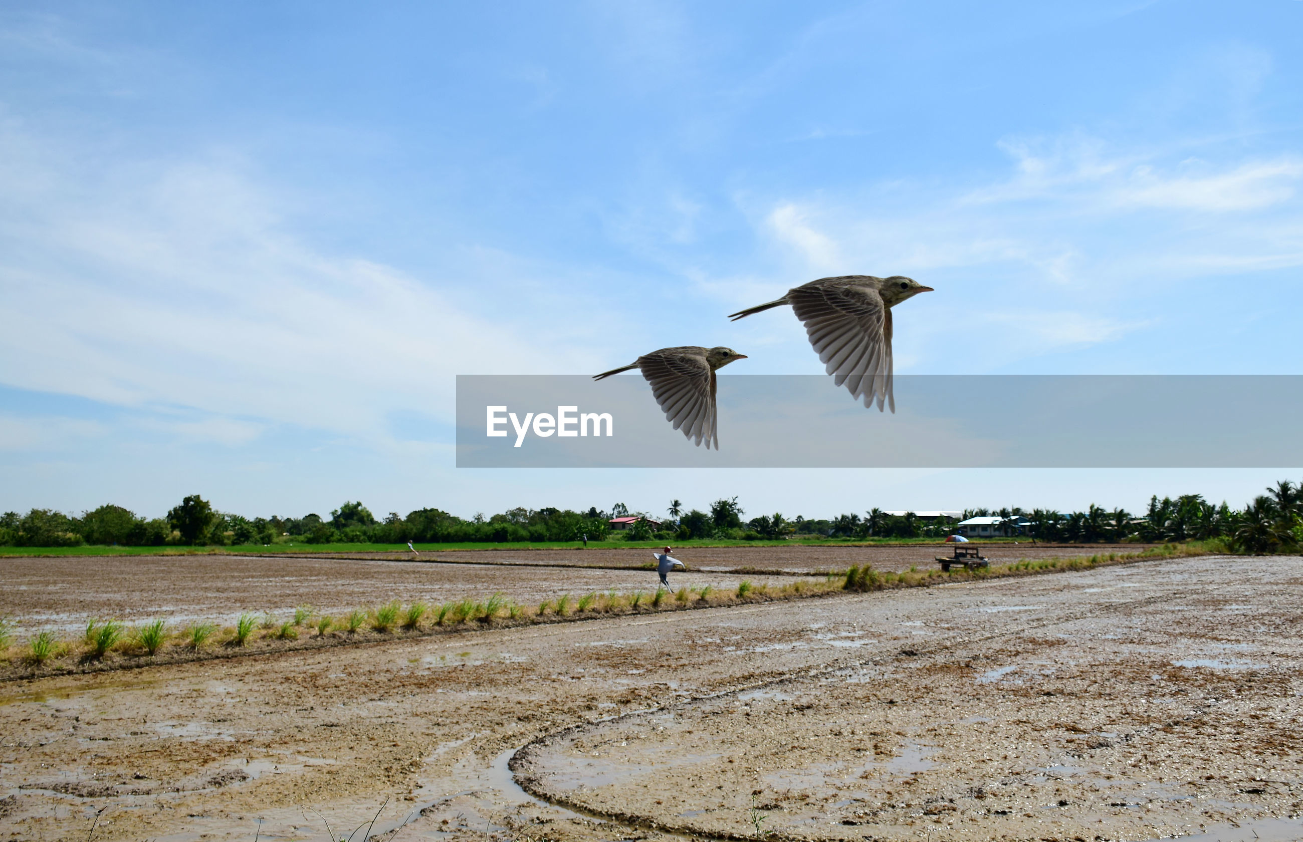 Beautiful view with two birds are flying on blue sky over farmland. life with freedom concept.