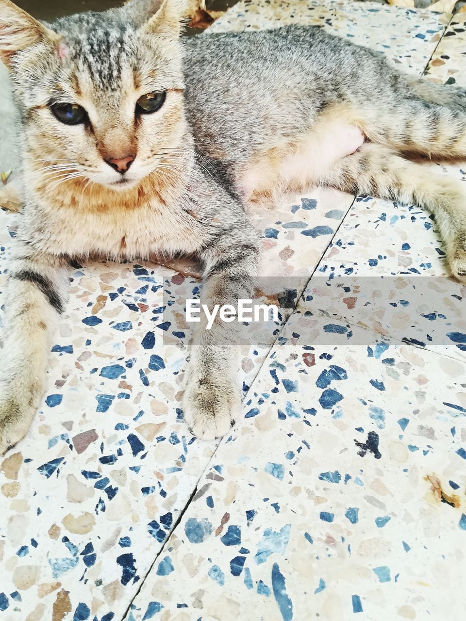 cat, feline, domestic cat, animal, mammal, animal themes, pets, indoors, domestic, one animal, domestic animals, bed, furniture, relaxation, no people, vertebrate, close-up, home interior, pattern, high angle view, flooring, whisker, tiled floor, floral pattern, animal eye