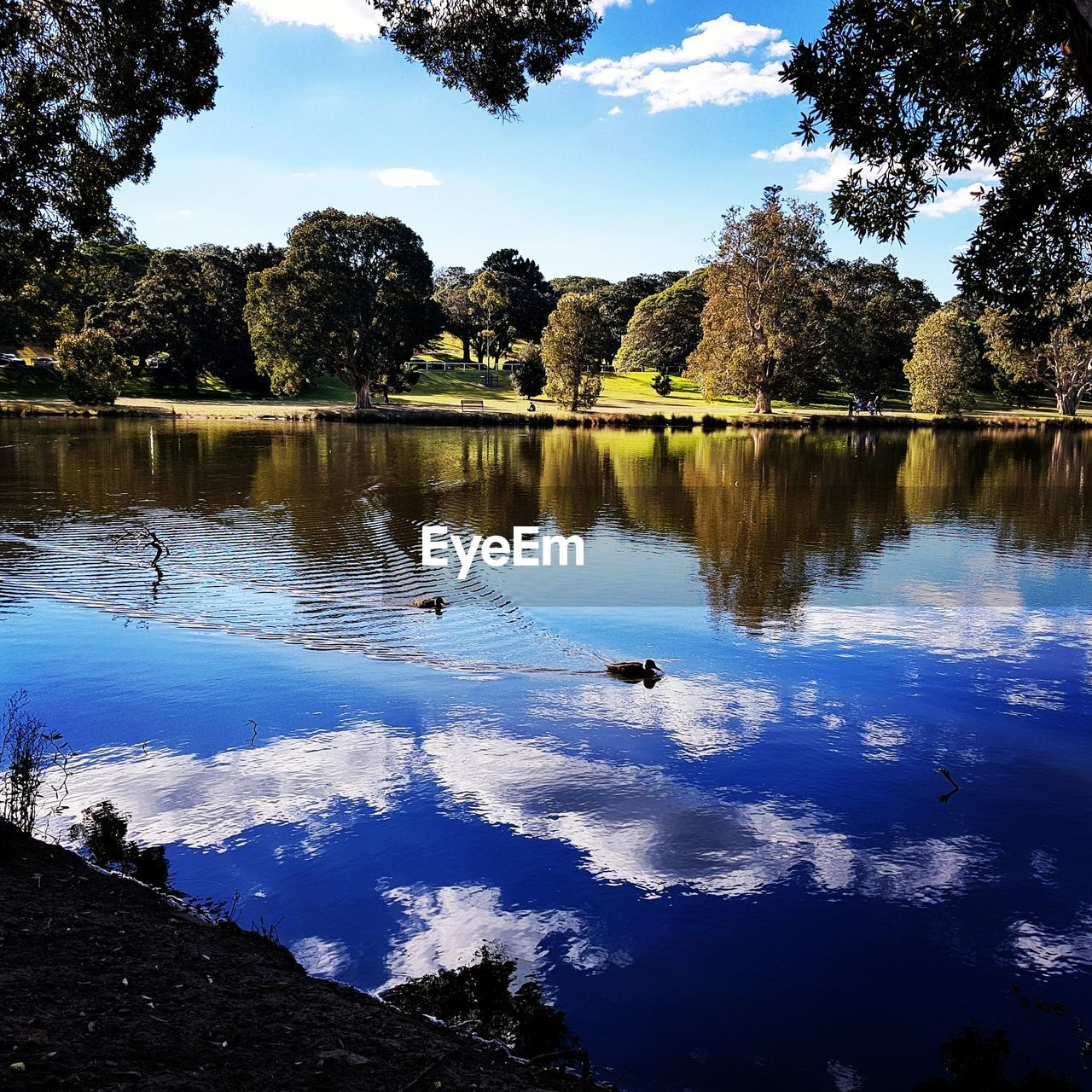 water, lake, tree, bird, animal, animal themes, animals in the wild, animal wildlife, vertebrate, reflection, plant, tranquility, sky, group of animals, nature, beauty in nature, tranquil scene, swimming, no people, duck, outdoors