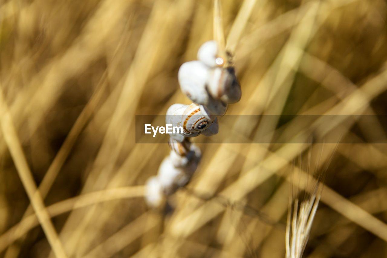 Close-up of snails on stem