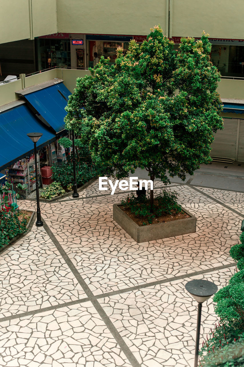 architecture, built structure, plant, building exterior, tree, nature, day, building, growth, no people, potted plant, outdoors, city, green color, house, street, sunlight, bush, residential district, footpath, courtyard, tiled floor, flower pot