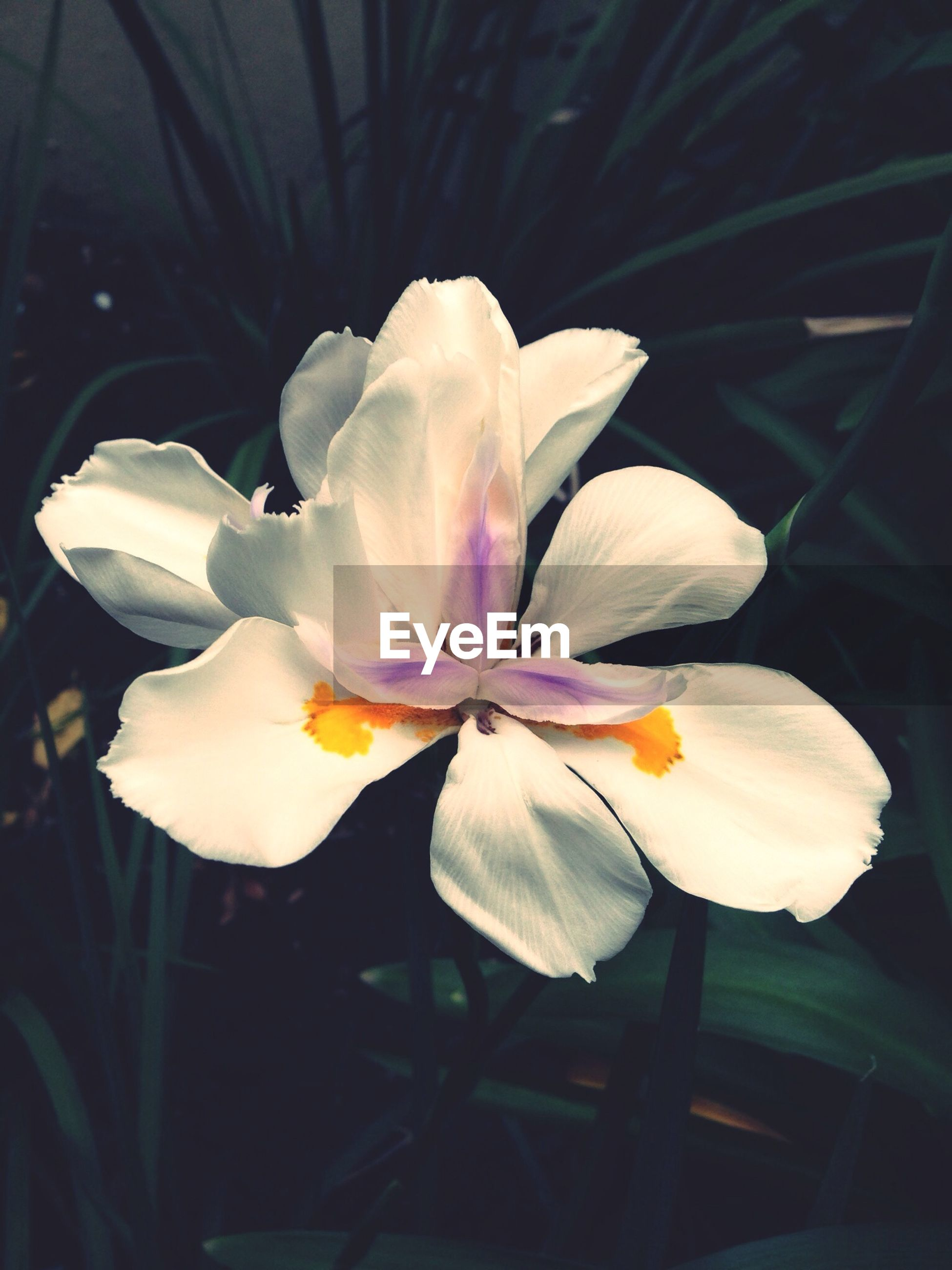 flower, petal, freshness, flower head, fragility, growth, beauty in nature, close-up, white color, blooming, nature, plant, stamen, focus on foreground, in bloom, pollen, blossom, stem, no people, single flower