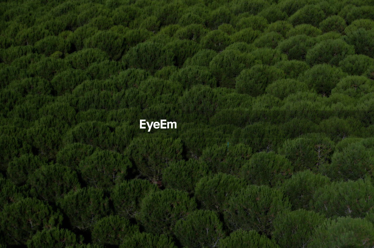 forest, nature, lush foliage, green color, growth, tree, no people, outdoors, day, plant, full frame, beauty in nature, scenics, tree area