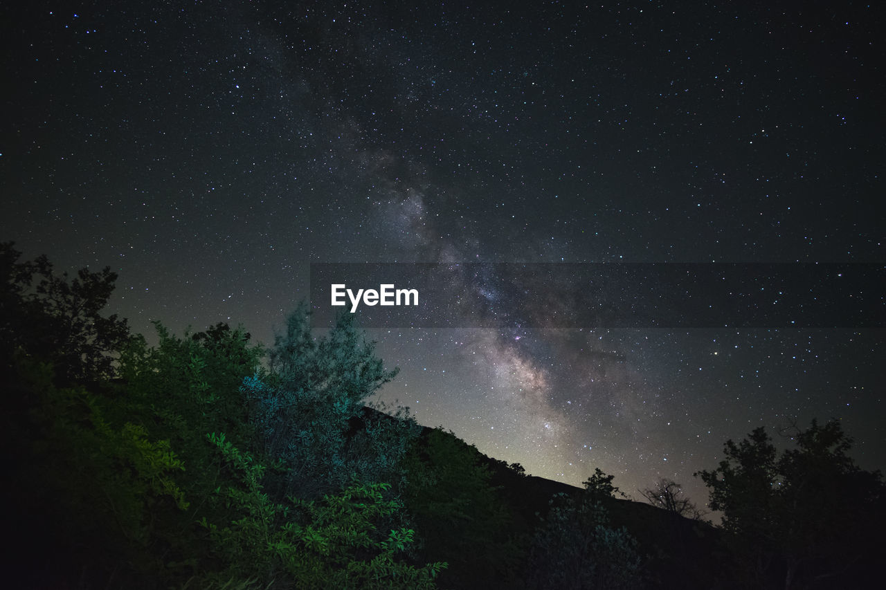 LOW ANGLE VIEW OF TREES AGAINST STAR FIELD