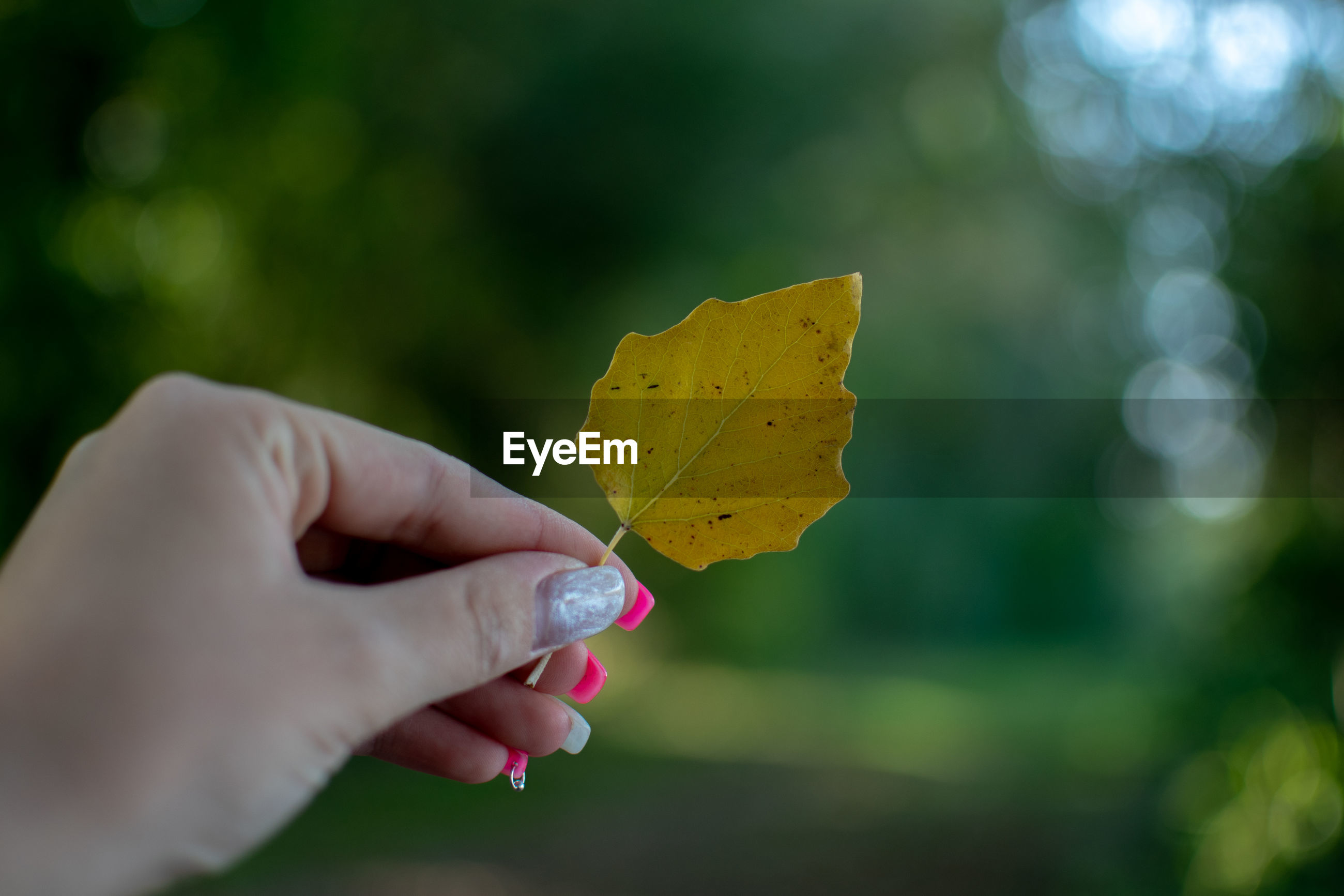 Close-up of woman hand holding yellow leaf during autumn