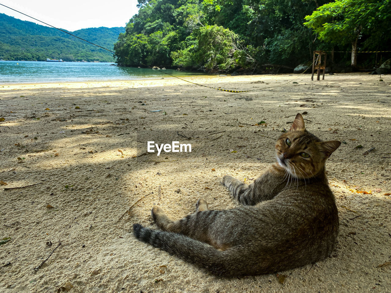 VIEW OF A CAT ON THE GROUND