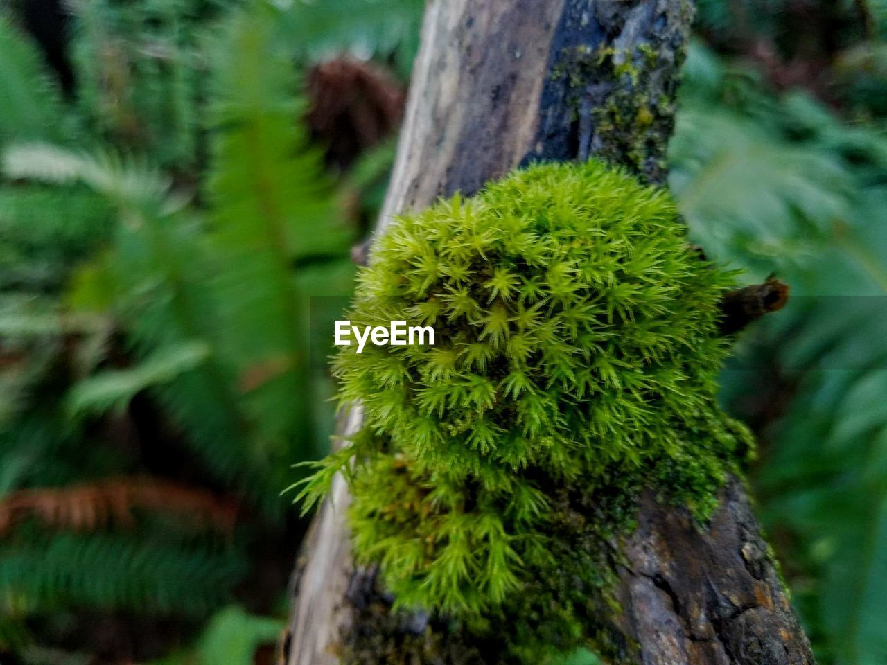 nature, growth, green color, plant, cactus, focus on foreground, day, outdoors, no people, beauty in nature, spiked, tree trunk, close-up, tree, flower, prickly pear cactus, freshness