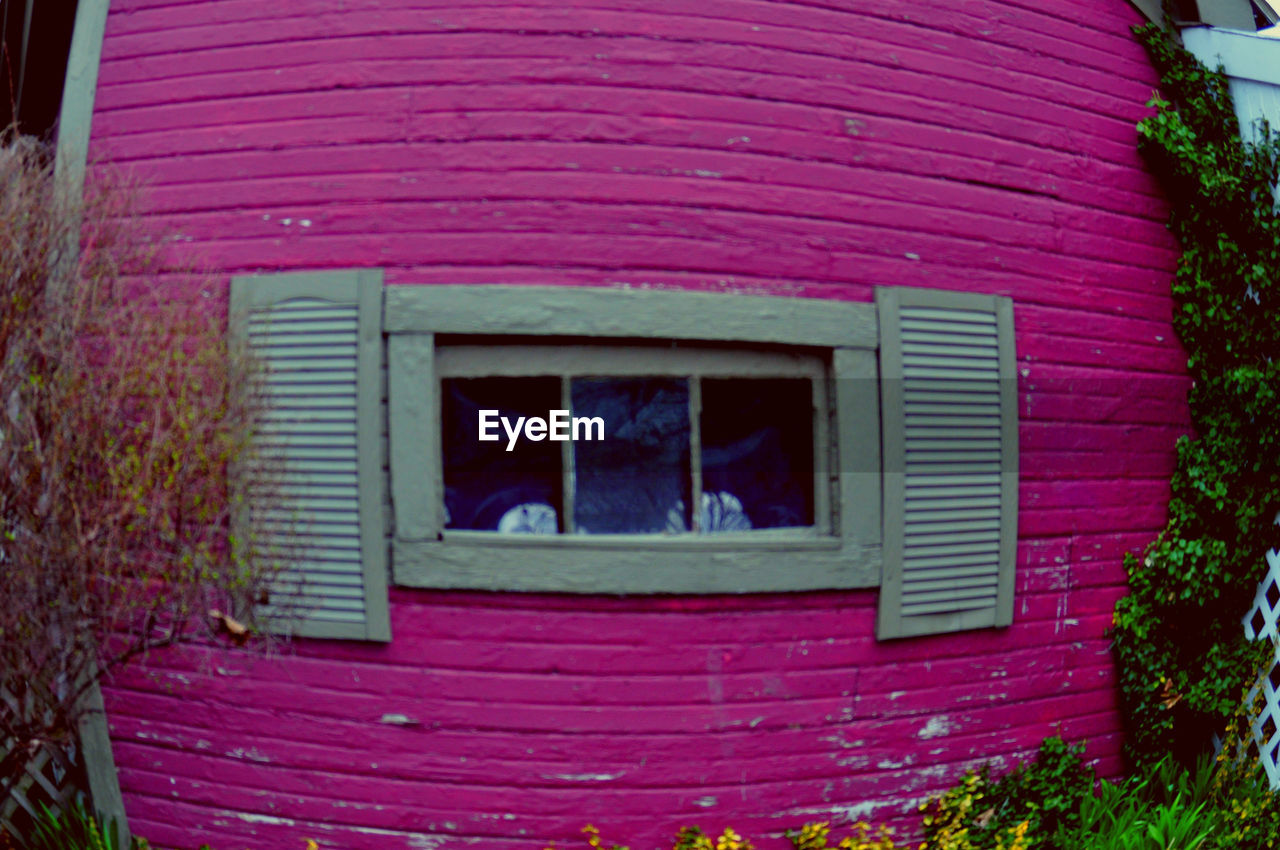 window, architecture, built structure, building exterior, no people, plant, outdoors, pink color, day, nature, window box, close-up