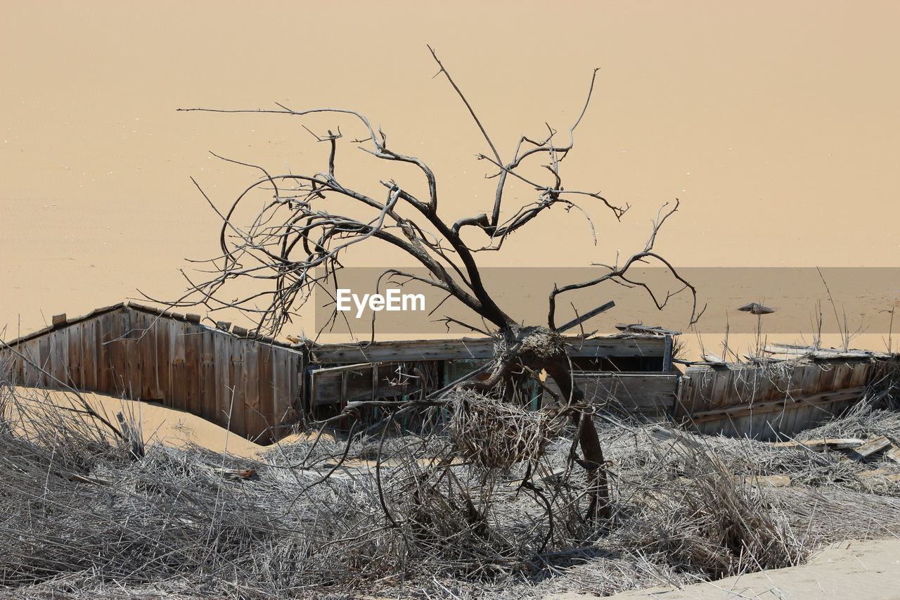 abandoned, bare tree, destruction, damaged, no people, dead plant, run-down, winter, dried plant, outdoors, nature, landscape, day, branch, cold temperature, clear sky