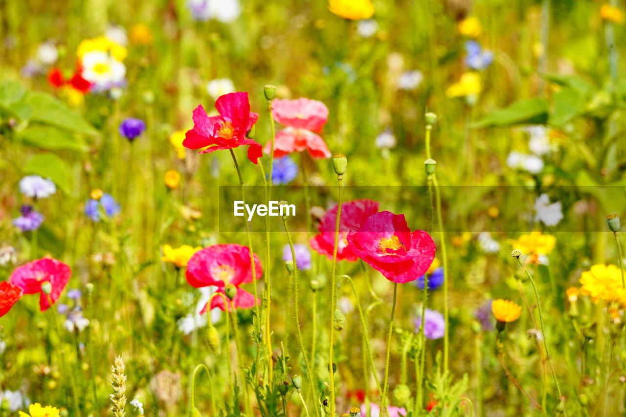 flowering plant, flower, plant, beauty in nature, freshness, growth, fragility, vulnerability, green color, nature, close-up, flower head, petal, inflorescence, no people, focus on foreground, field, land, day, outdoors, springtime, flowerbed