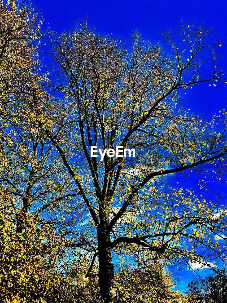 tree, low angle view, growth, branch, nature, beauty in nature, blue, no people, day, outdoors, flower, sky