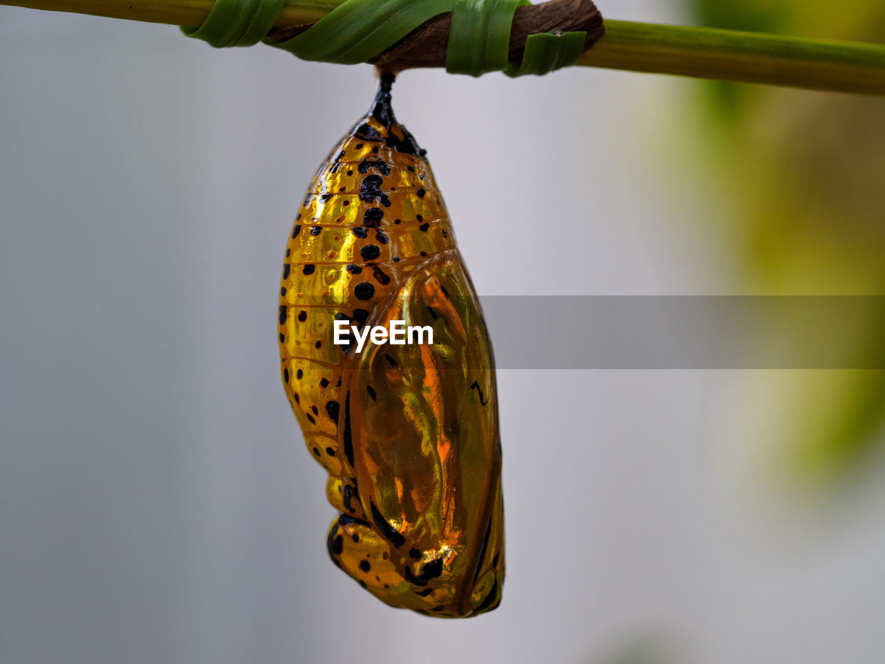 Close-Up Of Caterpillar On Branch