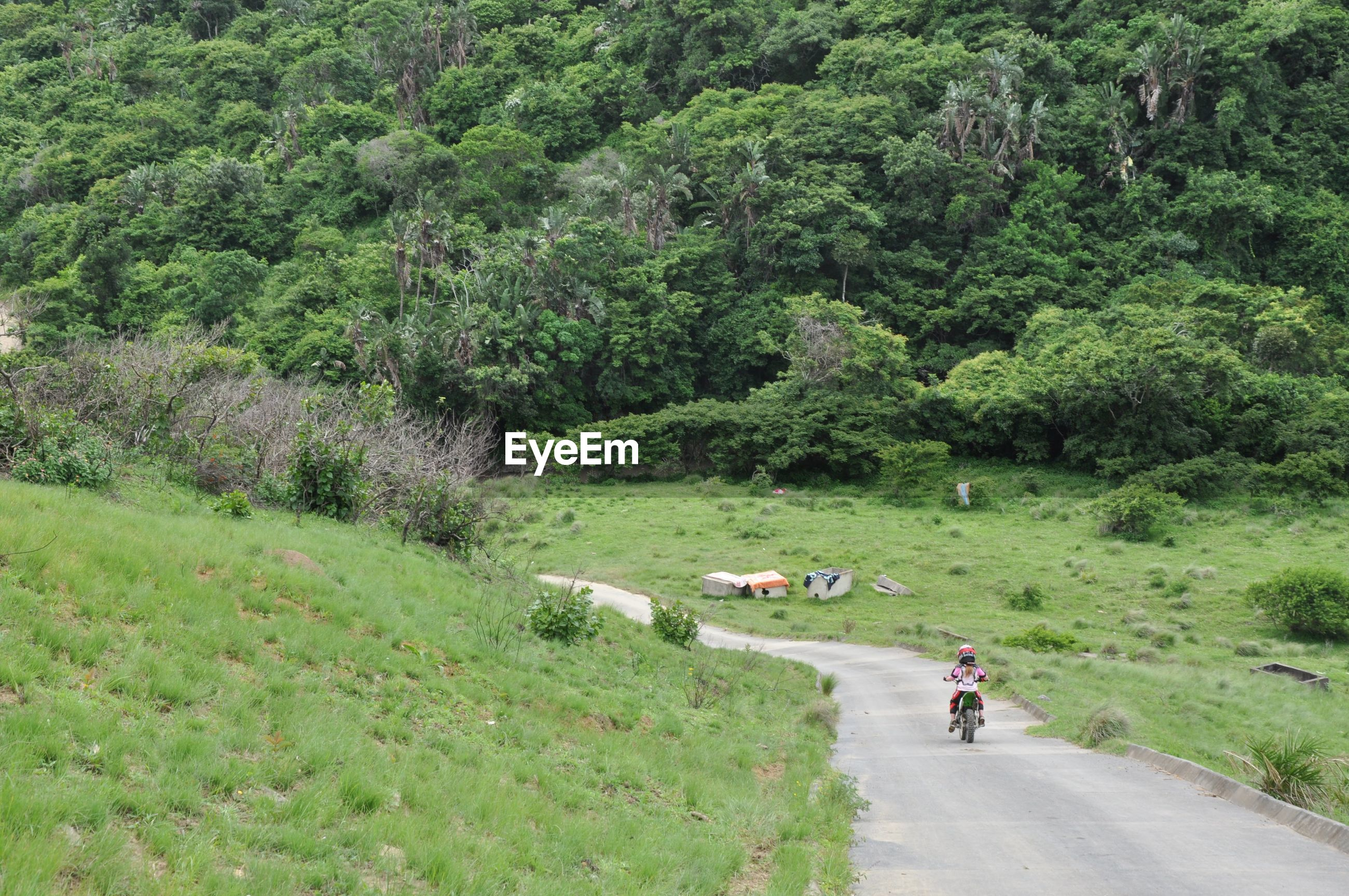 Rear view of person riding bicycle on road against forest