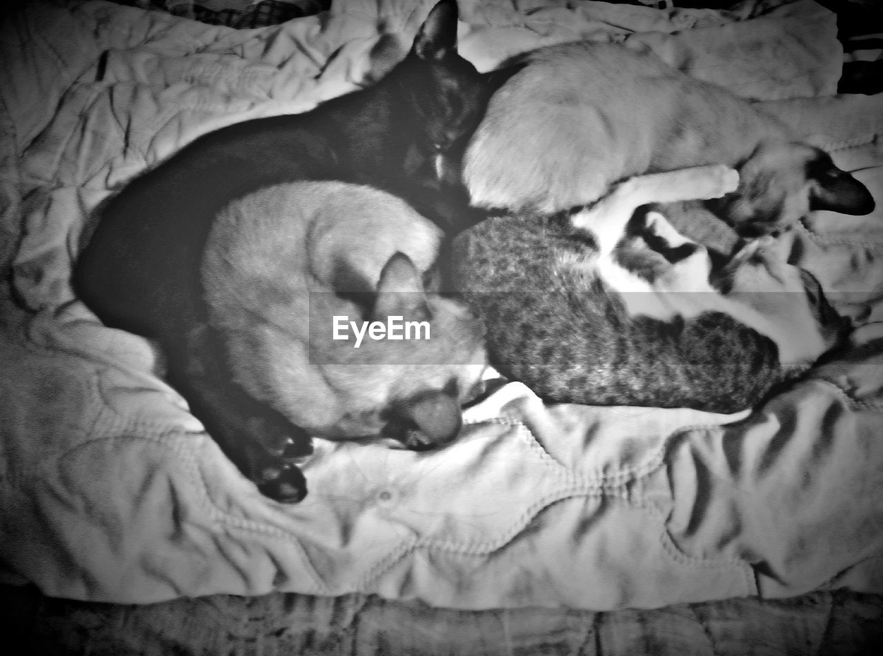 mammal, domestic animals, domestic, pets, animal, animal themes, relaxation, sleeping, dog, canine, furniture, group of animals, young animal, bed, vertebrate, indoors, no people, resting, high angle view, animal family