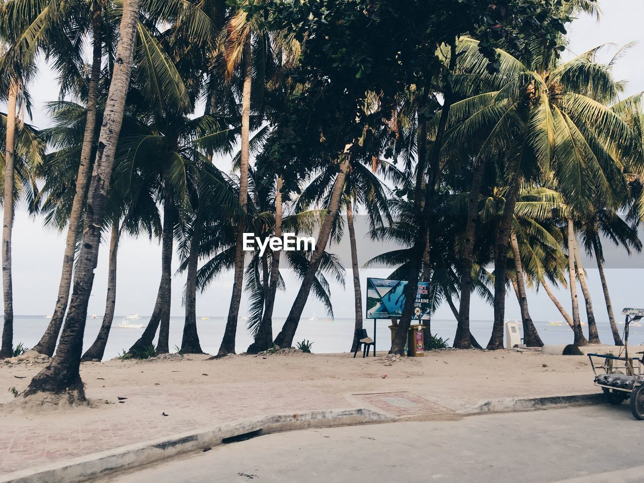 palm tree, tropical climate, tree, plant, beach, land, nature, sand, growth, sky, beauty in nature, day, sea, real people, tree trunk, trunk, men, water, lifestyles, scenics - nature, horizon over water, outdoors, coconut palm tree, tropical tree