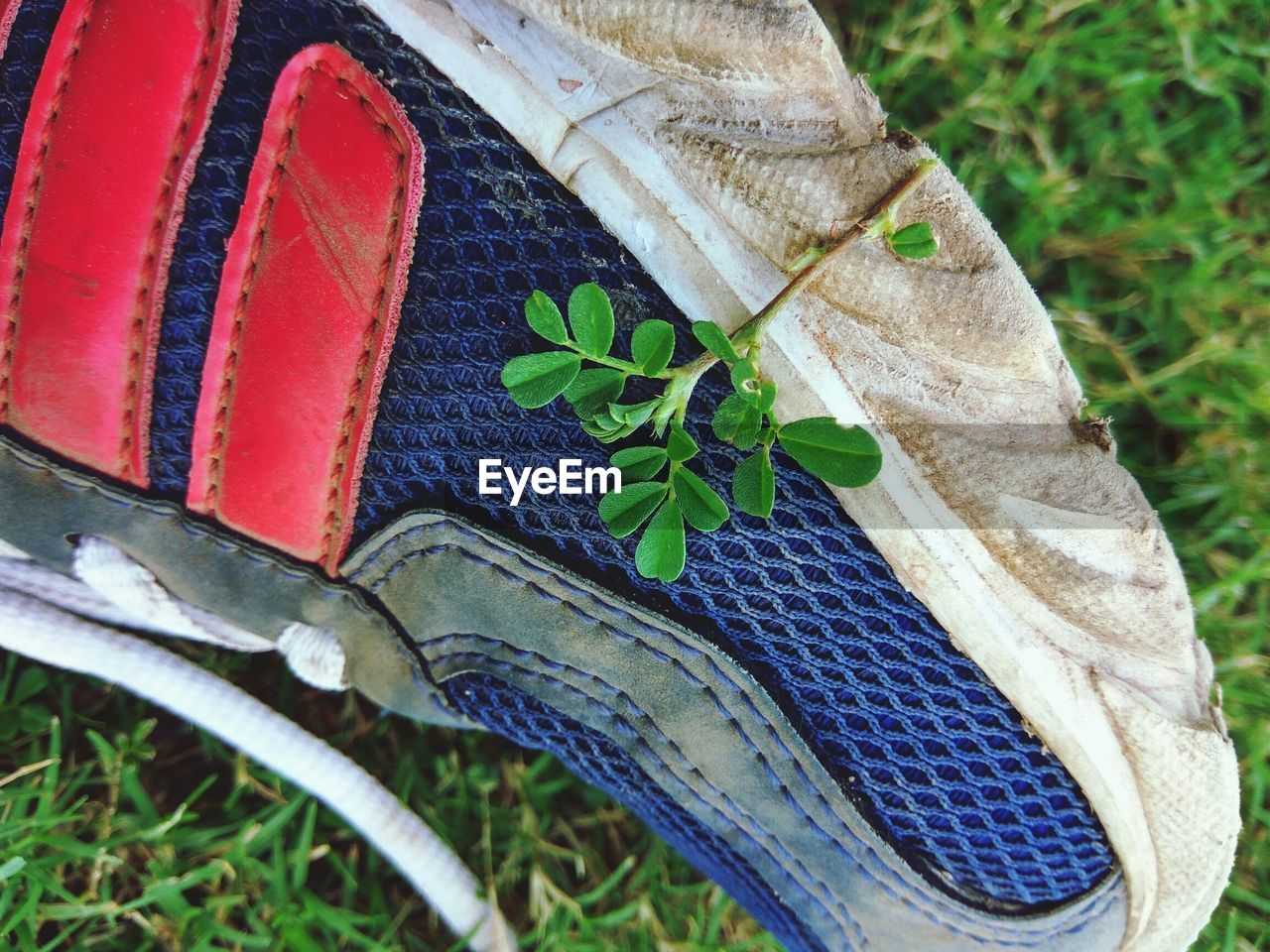 leaf, plant, growth, day, outdoors, green color, no people, shoe, close-up, nature