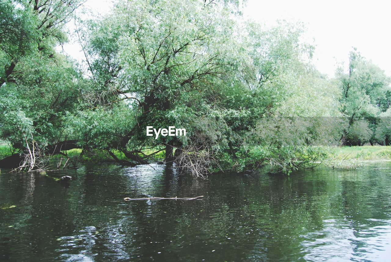 Trees On Riverbank