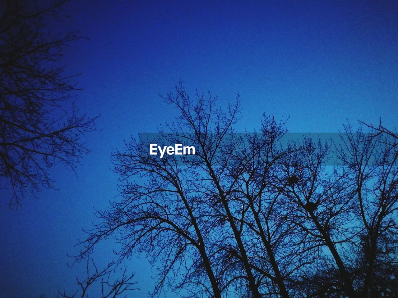 blue, nature, low angle view, tree, clear sky, beauty in nature, outdoors, branch, tranquility, no people, bare tree, growth, day, sky