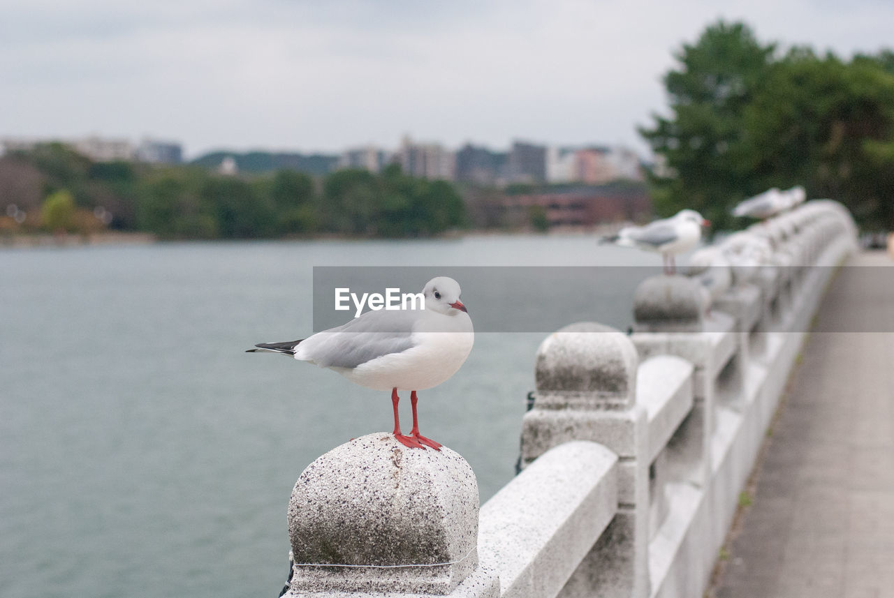 bird, water, vertebrate, animal themes, animal, animals in the wild, animal wildlife, seagull, perching, focus on foreground, architecture, day, nature, sea, no people, built structure, one animal, retaining wall, sky, outdoors, concrete