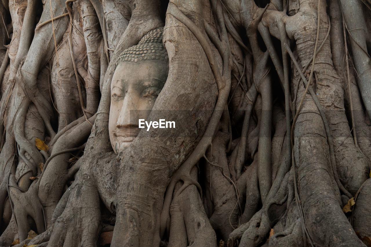 Buddha Sculpture On Tree