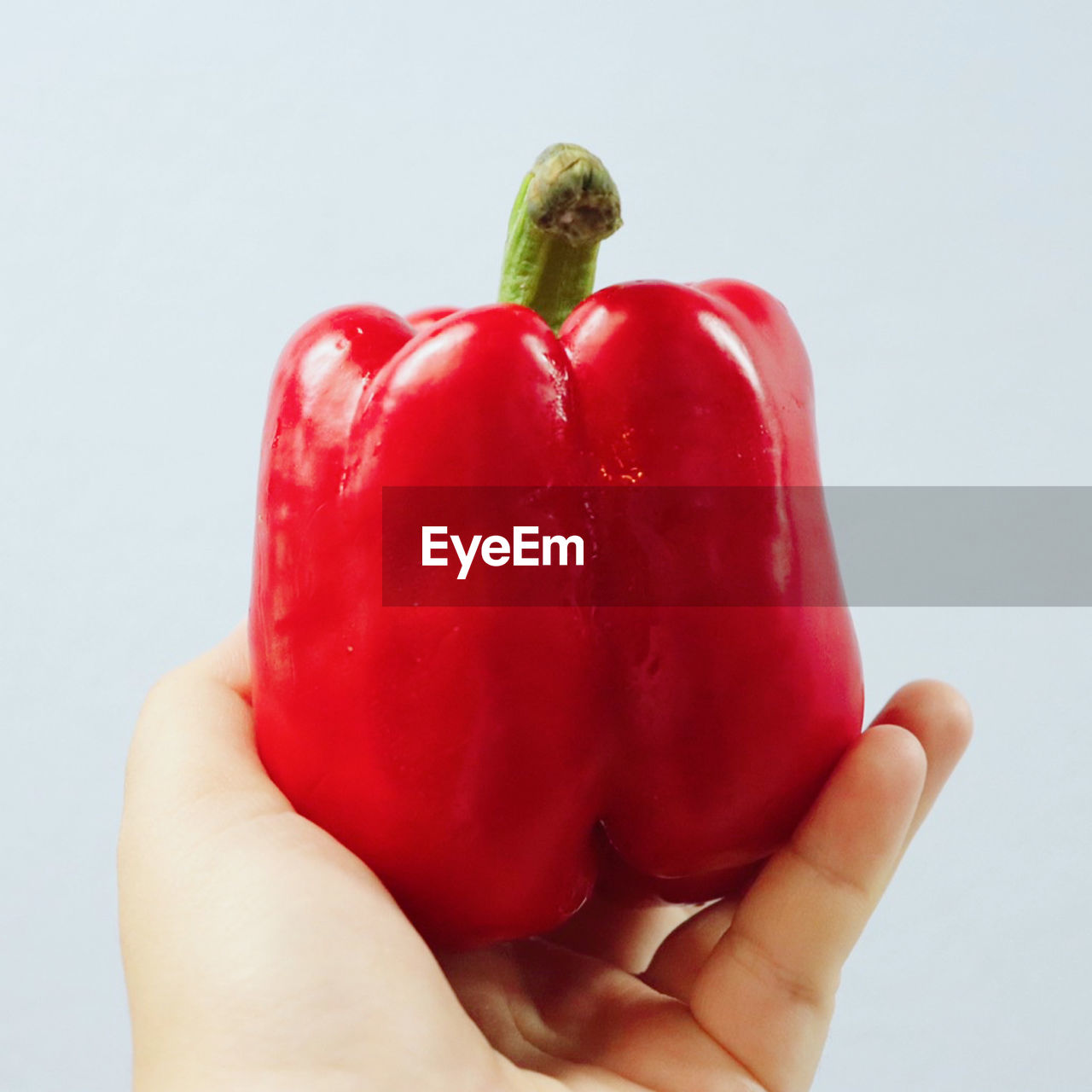CLOSE-UP OF HAND HOLDING RED BELL PEPPER