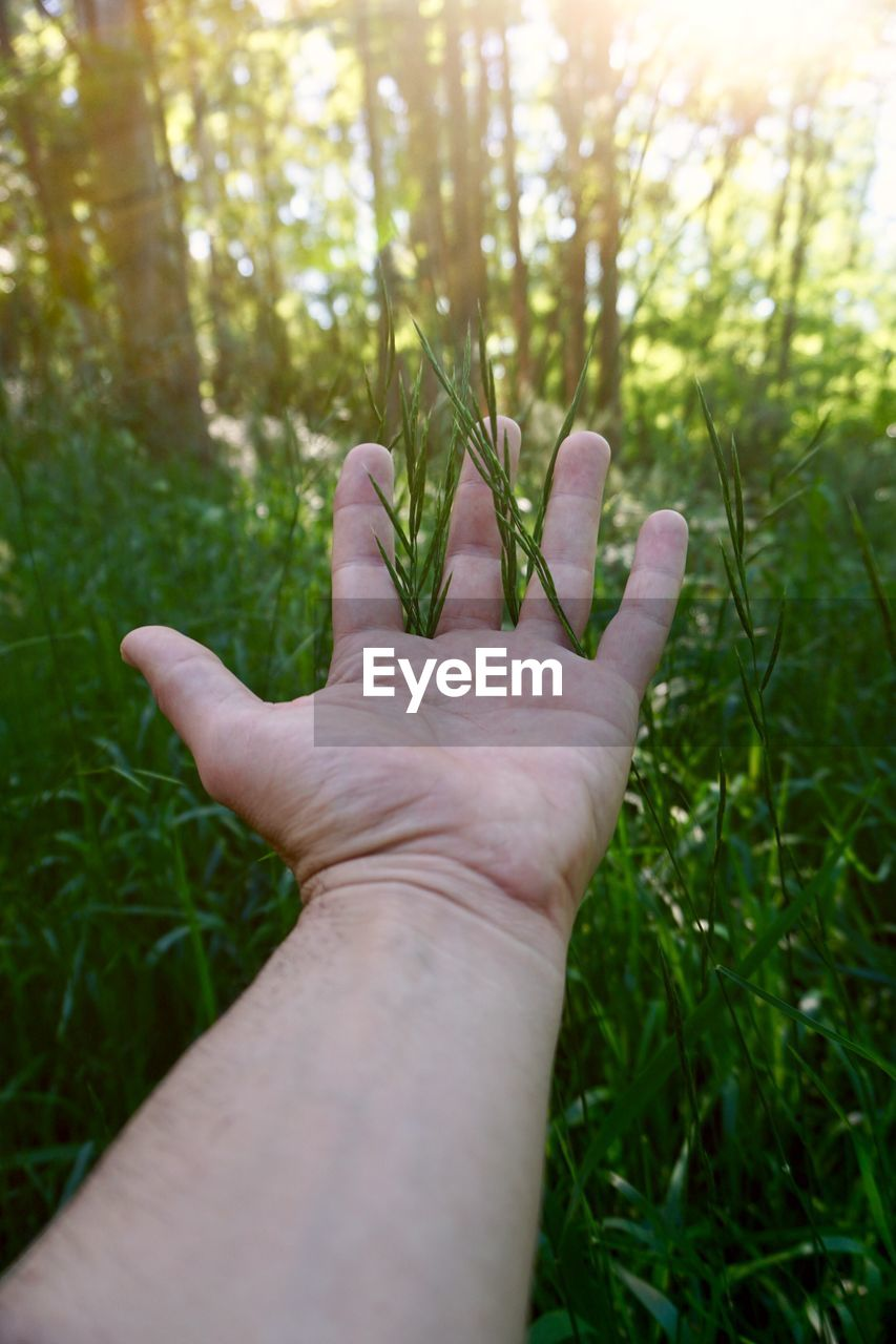 human hand, hand, plant, human body part, personal perspective, one person, real people, nature, growth, finger, human finger, body part, close-up, unrecognizable person, lifestyles, day, focus on foreground, grass, leisure activity, land, outdoors
